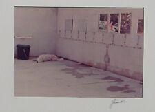Luigi GHIRRI (Fellegara 1943–Roncocesi 1992) FOTO ORIGINALE firmata datata 1976