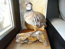 Taxidermie oiseaux perdrix rouges et grise  empaillé naturalisé  bird curiosité