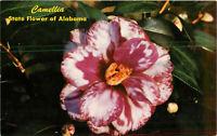 Postcard Camellia State Flower Of Alabama