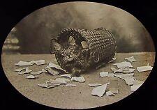 Glass Magic Lantern Slide CAT IN A BASKET TITLED MISCHIEF C1890 PHOTO KITTEN