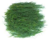 Fresh Eastern Pine Needles for Teas Tinctures Cooking Songpyeon 8x10 Bag