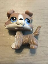 Littlest Pet Shop Border Collie 67 Blue Eyes Brown Tan White Puppy Dog