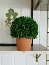 """Preserved Boxwood Tree Topiary 8"""" Ball 10"""" tall total height in terra cotta pot"""