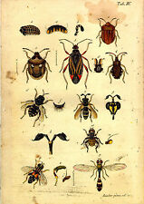 4 x 18th Century Repro  Natural History Print's of Insects
