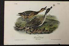 AUDUBON'S BIRDS of AMERICA  -  PINTAIL DUCK  -  First Edition Octavo Plate 390