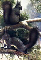 "perfect 24x36 oil painting handpainted on canvas ""Two squirrels""@NO4163"