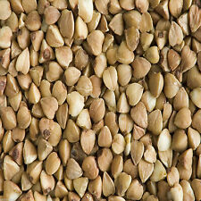 Buckwheat Seeds Cover Crop 3 Lbs - 1000 Sq Ft Coverage