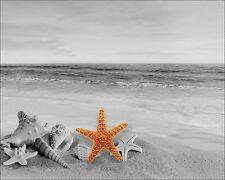 Beach Photo Art Print Home Wall Decor 11 x 14 Double Mat Sand Starfish Picture
