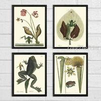 Unframed Frogs Wall Art Print Set 4 Antique Animal Vintage Illustration Decor