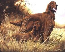 Irish Setter Print by Robert J. May