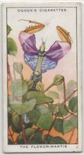 Flower Mantis Mimic Flowers Patterns Lure Prey 85+ Y/O Trade Ad Card