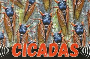 Postcard Cicadas Brood X Periodical Cicada Insects Magicicada septendecim MINT