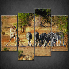 GIRAFFE ZEBRAS AFRICA CANVAS PRINT PICTURE WALL ART HOME DECOR FREE DELIVERY