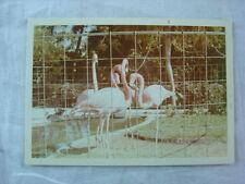 Unusual Vintage Color Photo Pink Flamingo Birds w/ Fence Filter 793