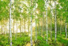 Fototapete Birkenwald Natur Wald Wandbild Sonne Fotoposter Bildtapete Wandtapete