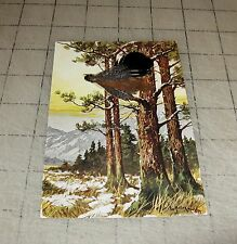 EAGLE - BIRD IN TREES (Real Feathers) Postcard in VG Condition - EB & Co, NY