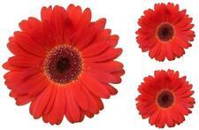3x Pegatina adesivi adhesivo sticker coccion autoadhesiva habitacion flor rojo