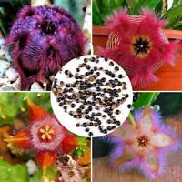 New Stapelia Easy Grow Seeds Colorful Mammillaria Cactus Seeds C5