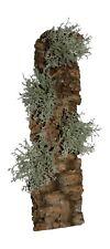 Vivarium Cork Bark Decoration .Planted With Artificial Grey Lichen