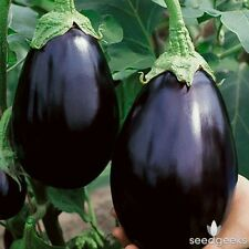 Heirloom Black Beauty Eggplant 75 Seeds Non-GMO USA + FREE Gift & COMB S/H