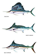 Saltwater Game Fish Poster, Blue & White Marlin, Sailfish, Fishing