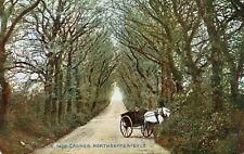 CROMER - Norfolk - Northrepps Avenue - Original Unused Postcard (56)