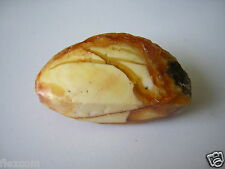 Butterscotch geschnittener Natur Bernstein 13,48 g/4,8 x 2,2 x 1,9 cm Amber