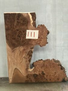 Natural Edge Burr Elm Timber Slice/offcut
