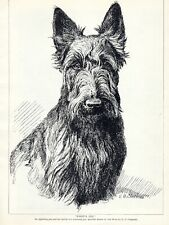 SCOTTISH TERRIER LOVELY HEAD STUDY BY E.G. CHAPMAN ORIGINAL 1934 DOG PRINT