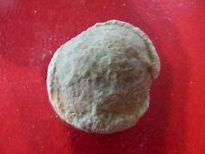 Scarce 'Dino Egg' Semi-precious Gem Stones From Lyall Mount Canada