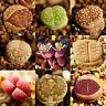 100pcs Rare Mix Lithops Seeds Living Stone Succulent Cactus Green Plant