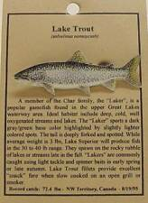 New Lake Trout Fish Hat Pin Lapel Pins