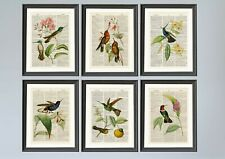 Set of 6 Humming Birds Dictionary Page A4 Art Prints Vintage Book Page Art