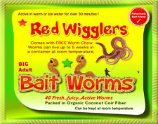 Red Wigglers (40 Adult, Live) Healthy Large Red Worms for Composting And Garden