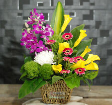 Fresh Flowers Delivery Sydney - Perfect-Colourful AW08- Birthday/Newbaby Flowers