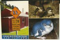 New Zealand Oamaru Blue Penguin Colony - posted 2009