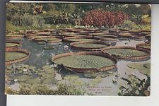 Lily Pond in Como Park St Paul MN Minn   VO Hammon 1329