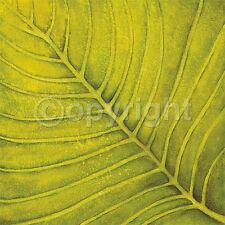 Caroline Wenig: Fresh Green Blatt Grün Fertig-Bild 30x30