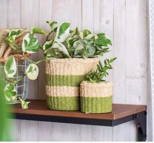 Sass & Belle Cement Woven Basket Indoor decorative planter flower pot green