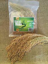 Qld Spray Millet- White French spray millet 100gr treat seed bird feed