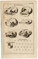 Antique Print-QUINCUNX-PATTERN-HERALDRY-SKULL-QUADRUPEDS-Buys-1770