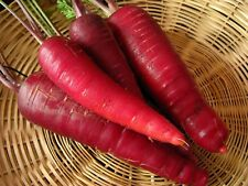 Carrot Seeds- Cosmic Purple- 200+ 2018 Seeds       $1.69 max. shipping!