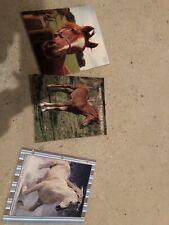 Set Of 3 School Horse Folders(NEW)!