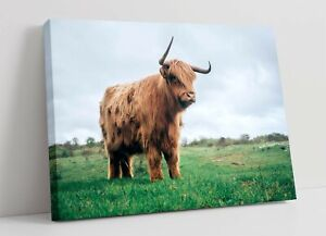 HIGHLAND COW 5 LARGE CANVAS WALL ART FLOAT EFFECT/FRAME/PICTURE/POSTER PRINT