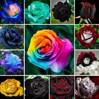 200Pcs Rare Colorful Rainbow Rose Flower Seeds Home Garden Plants Multi-Color