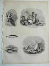 c1850s ENGRAVINGS FISHERMAN IZAAK WALTON SPRAT FISHING PURFLEET THAMES CORNISH