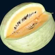 Drought Resistent Watermelon - *Desert King* - (Citrullus lanatus) - 5 seeds