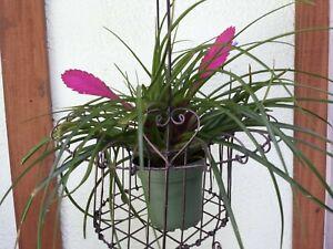 Vintage Metal Wire Basket plant pot holder desk table decor fruit basket gift