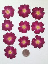 Pressed Flowers 10 DARK RED MARJORIE FAIR ROSE