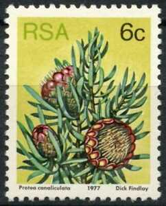South Africa 1977-82 SG#419, 6c Proteas, Plants Definitive MNH P12.5 #E8959
